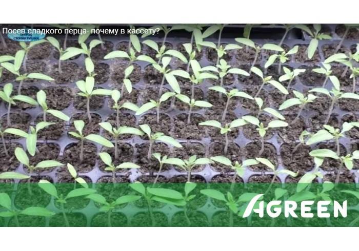 Опыт выращивания перца в кассетах для рассады Agreen