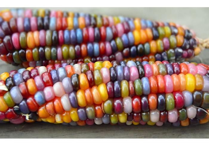 Радужная кукуруза