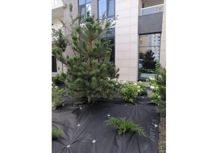 Мульчуюче агроволокно Agreen для ландшафтного дизайну
