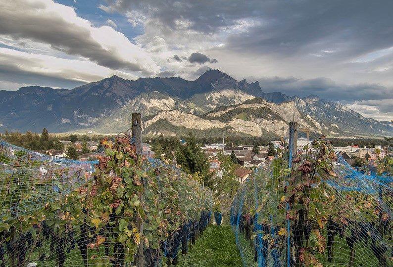 8 фактов о сельском хозяйстве Лихтенштейна