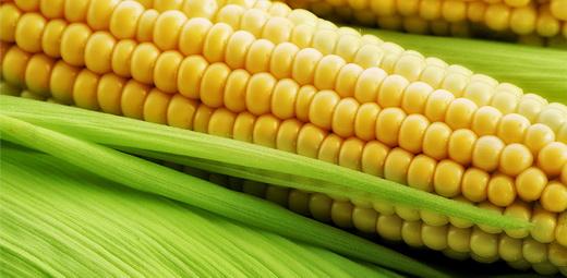 Мировой рекорд урожайности кукурузы
