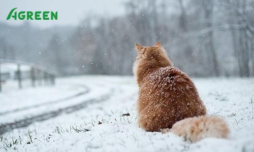 Заморозки и снегопады в Украине!