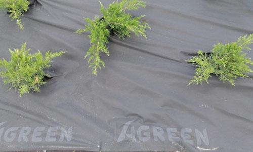 Мульчирующее агроволокно Agreen для ландшафтного дизайна