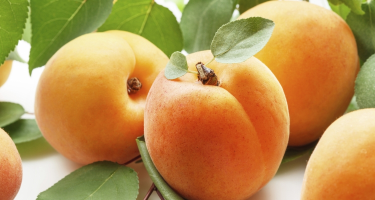 Дешёвые абрикосы